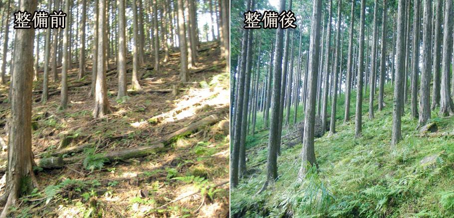 森の力再生事業